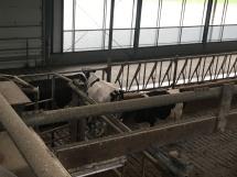 A tehenek sorban állnak a fejéshez